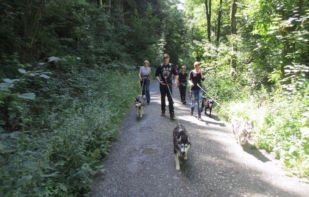 husky-trekking-schmallenberg-sport